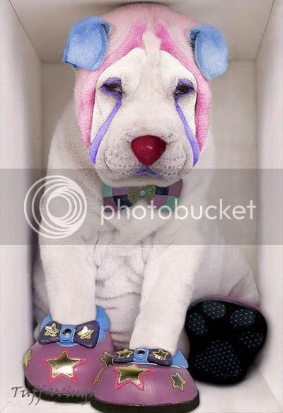 Shtazë simpatike Clown4