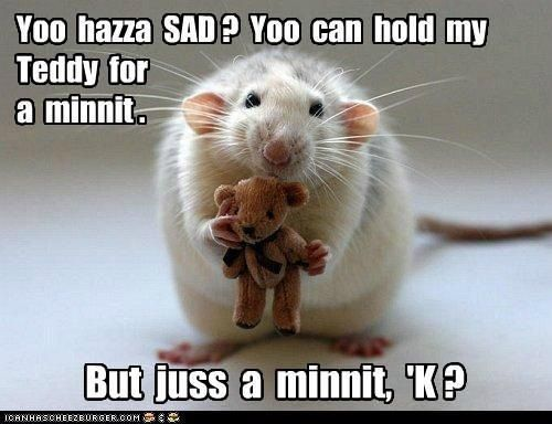 Nice to see positive rat pic! F3ce2c0e07277372a6e81809c71d32c0_zps65d88896