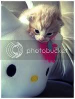 Kerli avatarid|uued![12.veebruar 2011] Hello__Kitty_by_pronouncedyou