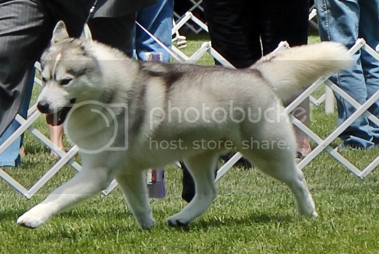 Went to a dog show - took pictures. 88462ee2-eec6-44a9-9789-bab33d46f456_zps5aee0819
