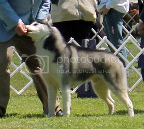 Went to a dog show - took pictures. 96dc4083-1e11-46e6-96c2-98b32588c0ed_zps9ddad5a3