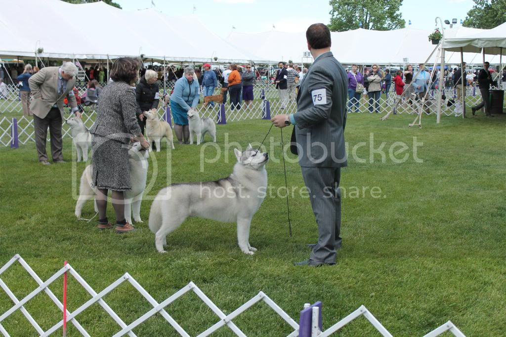 Went to a dog show - took pictures. IMG_0613_zps57e9f920