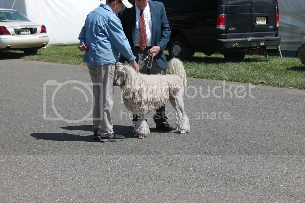 Went to a dog show - took pictures. IMG_0780_zps982f886a