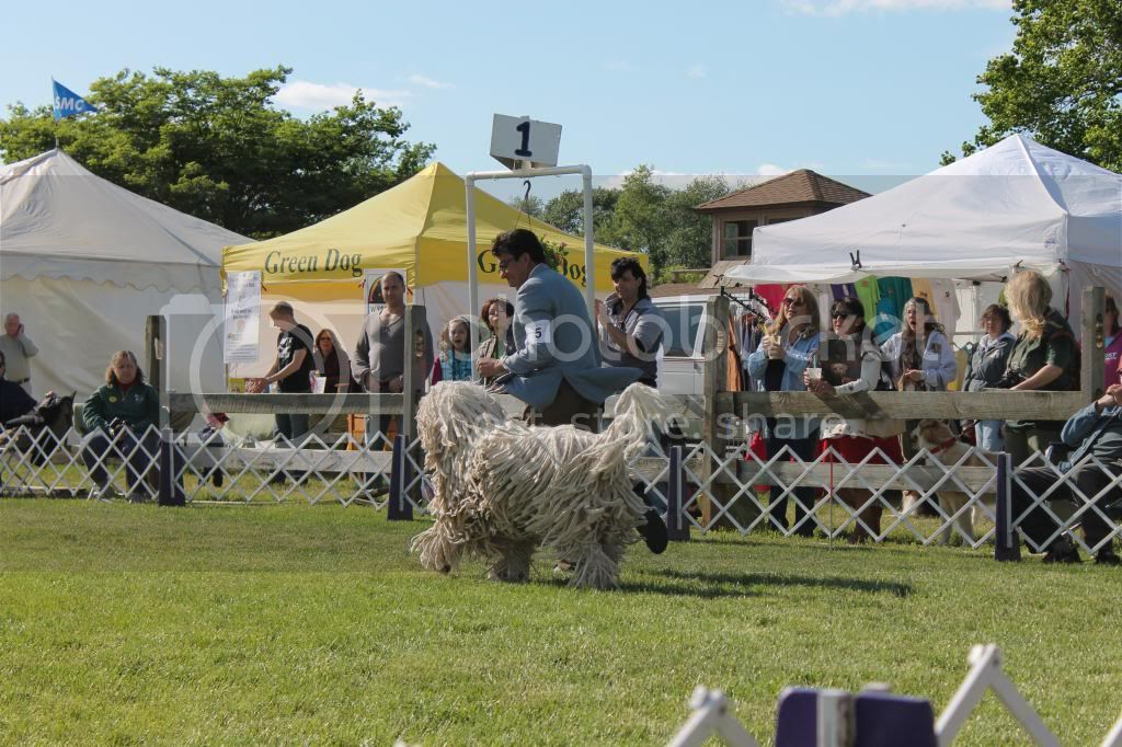 Went to a dog show - took pictures. IMG_0952_zps0a3c081a