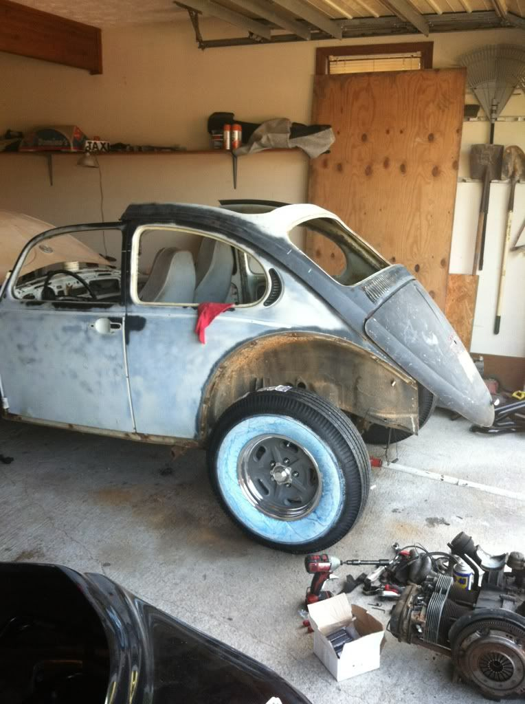 The Mutt Bug 0b9ec4d5