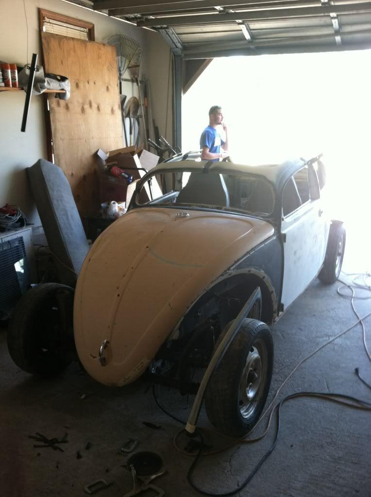 The Mutt Bug 0efaf827