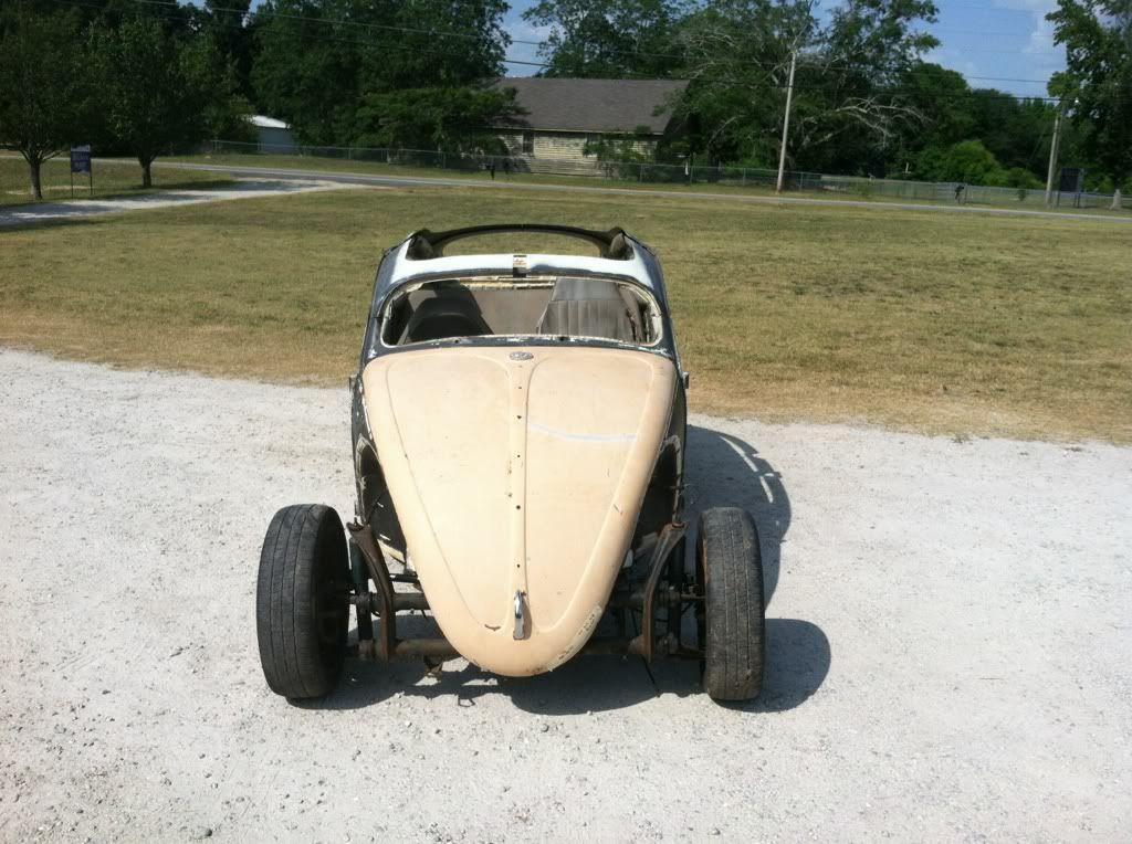 The Mutt Bug 6ff0b1ab