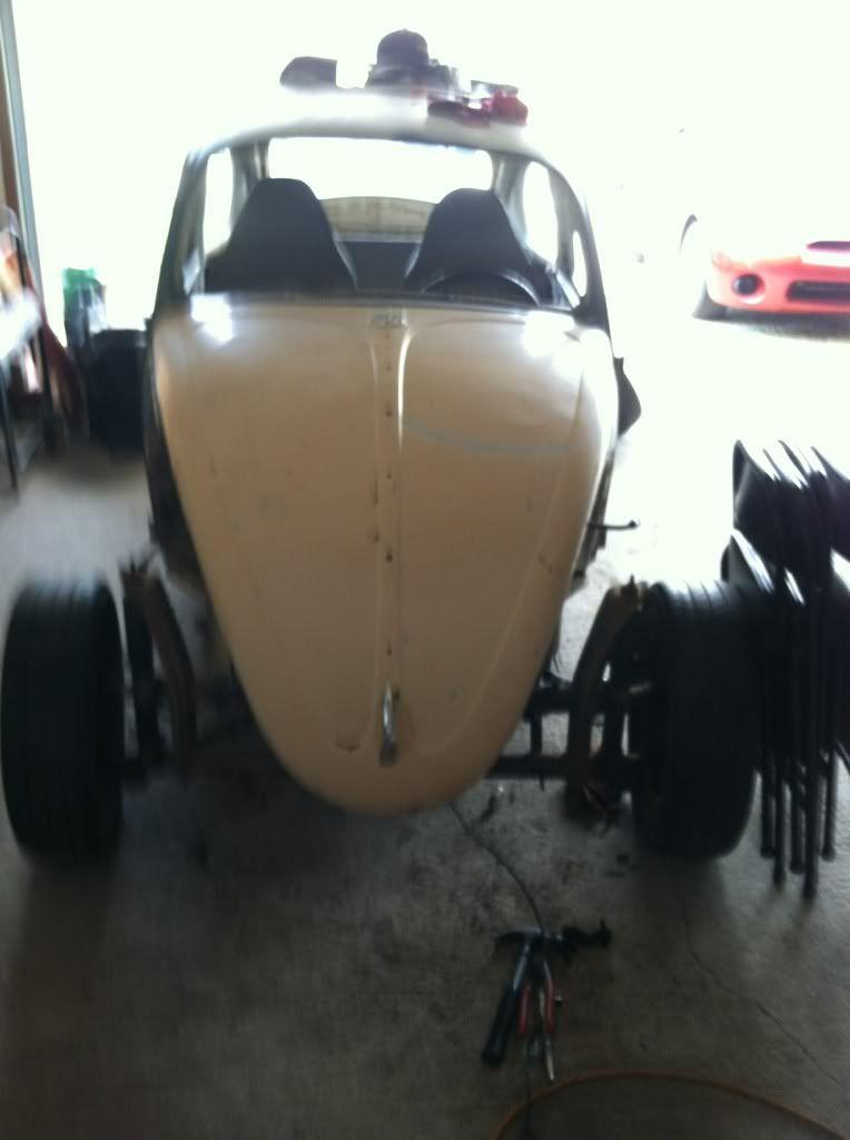 The Mutt Bug 9aa8575e
