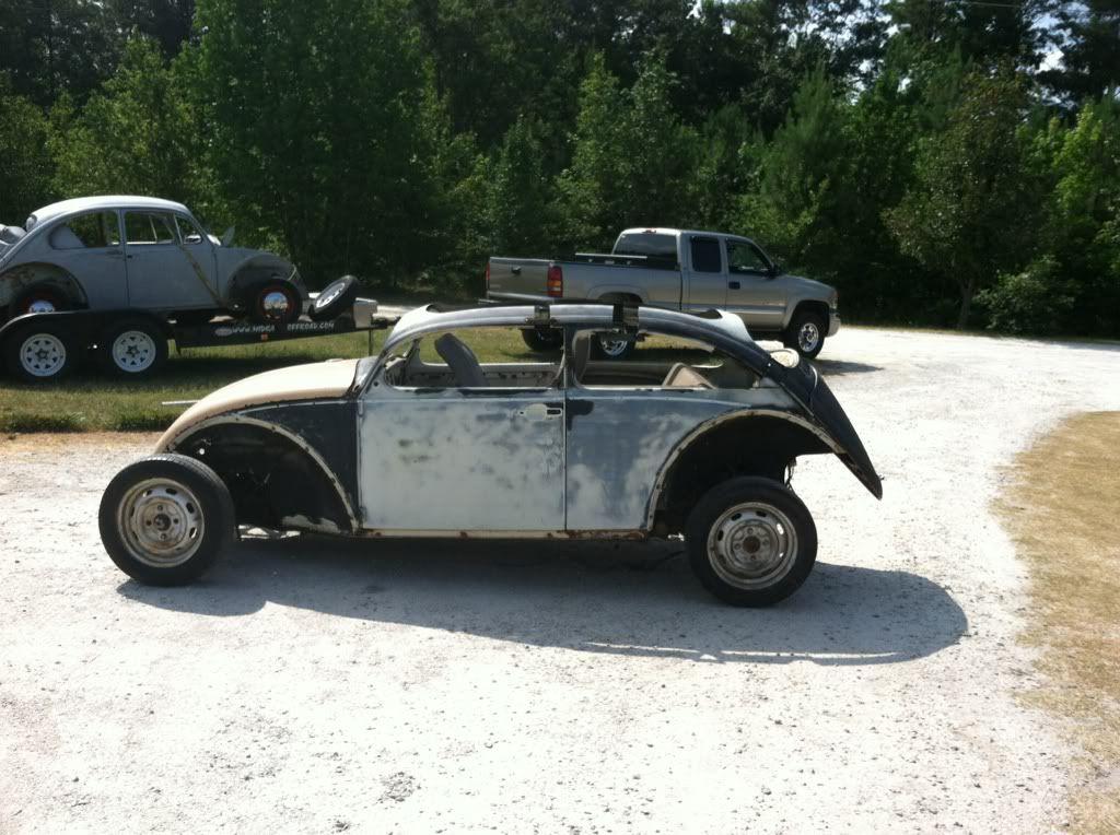 The Mutt Bug B312ab31