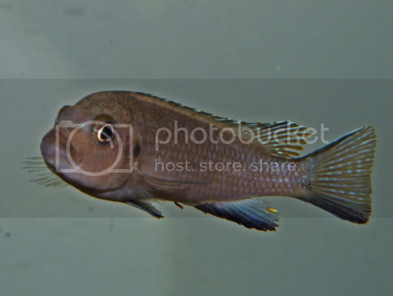 New fishes ID please DSCF4536