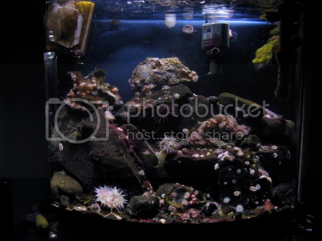 16 Gallon Coldwater IMG_0605