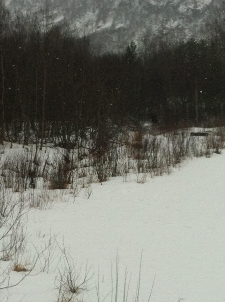 SNOW!!! IMG_0116