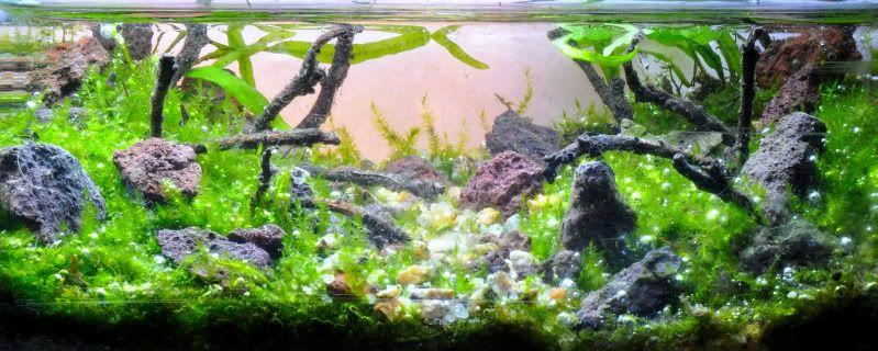 Concurso de acuarios - Página 4 _DSC2362