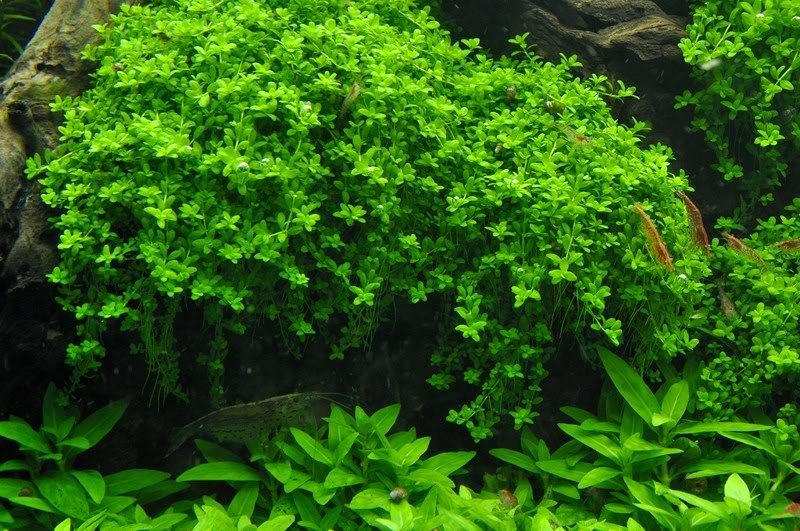 plantas que quiero intrudiciir _DSC3393Copiar-copia