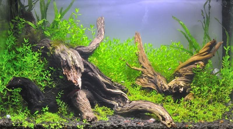 Concurso Mini Junio 2012 (hasta 40L) _DSC5195_01