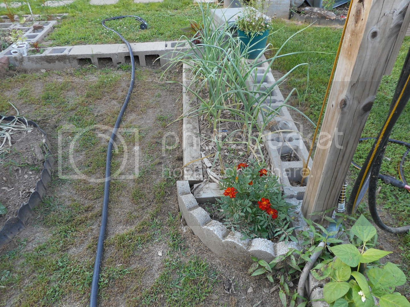 The 2015 Garden - Page 2 003_5