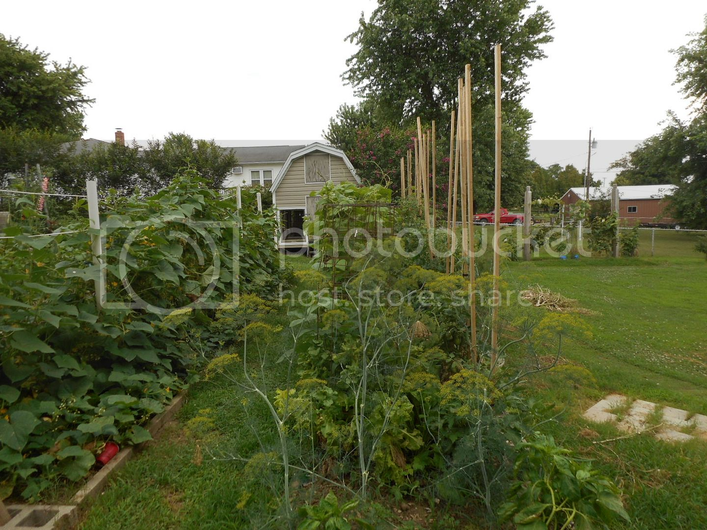The 2015 Garden - Page 2 004_6