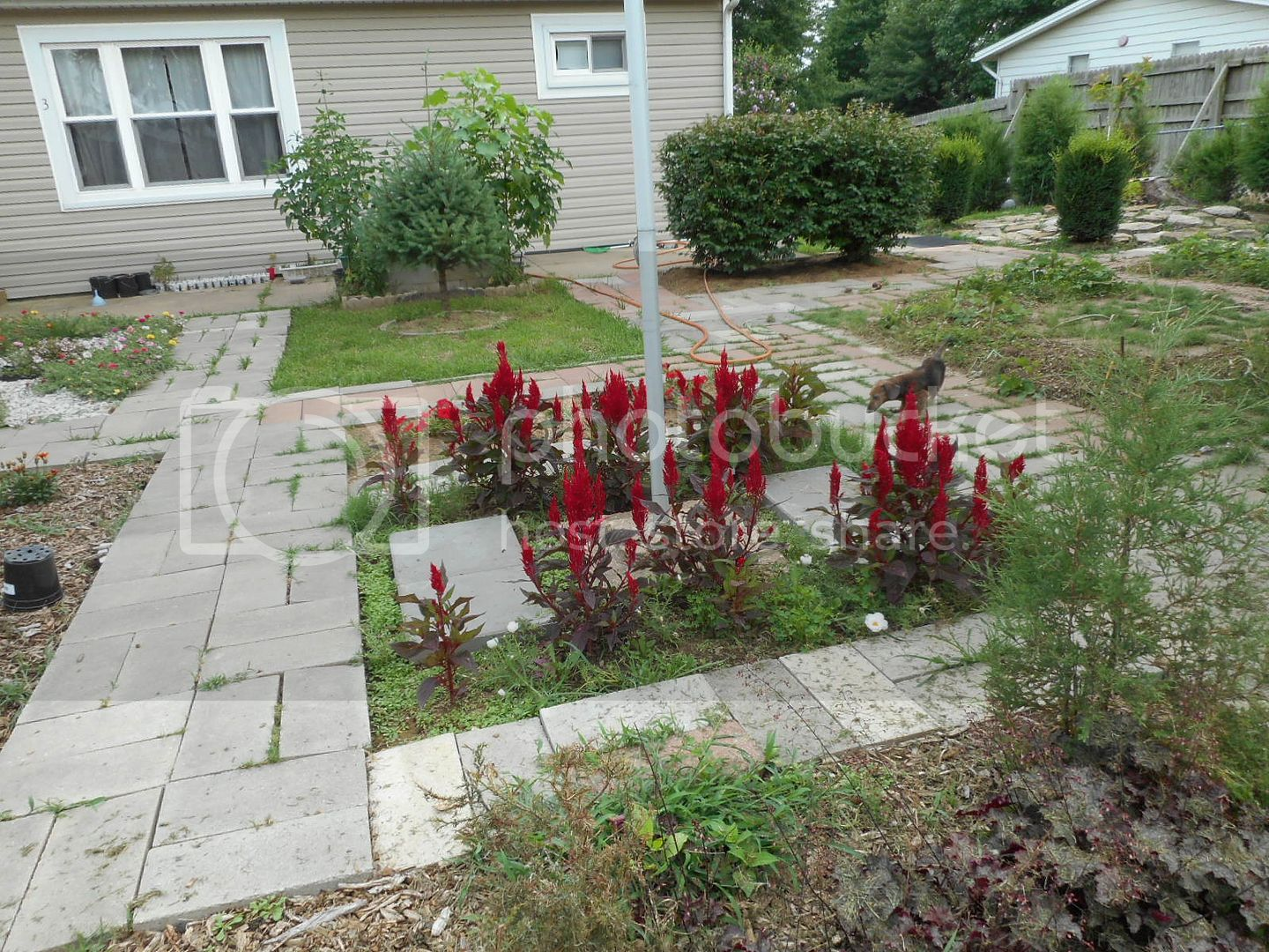 The 2015 Garden - Page 2 004_7