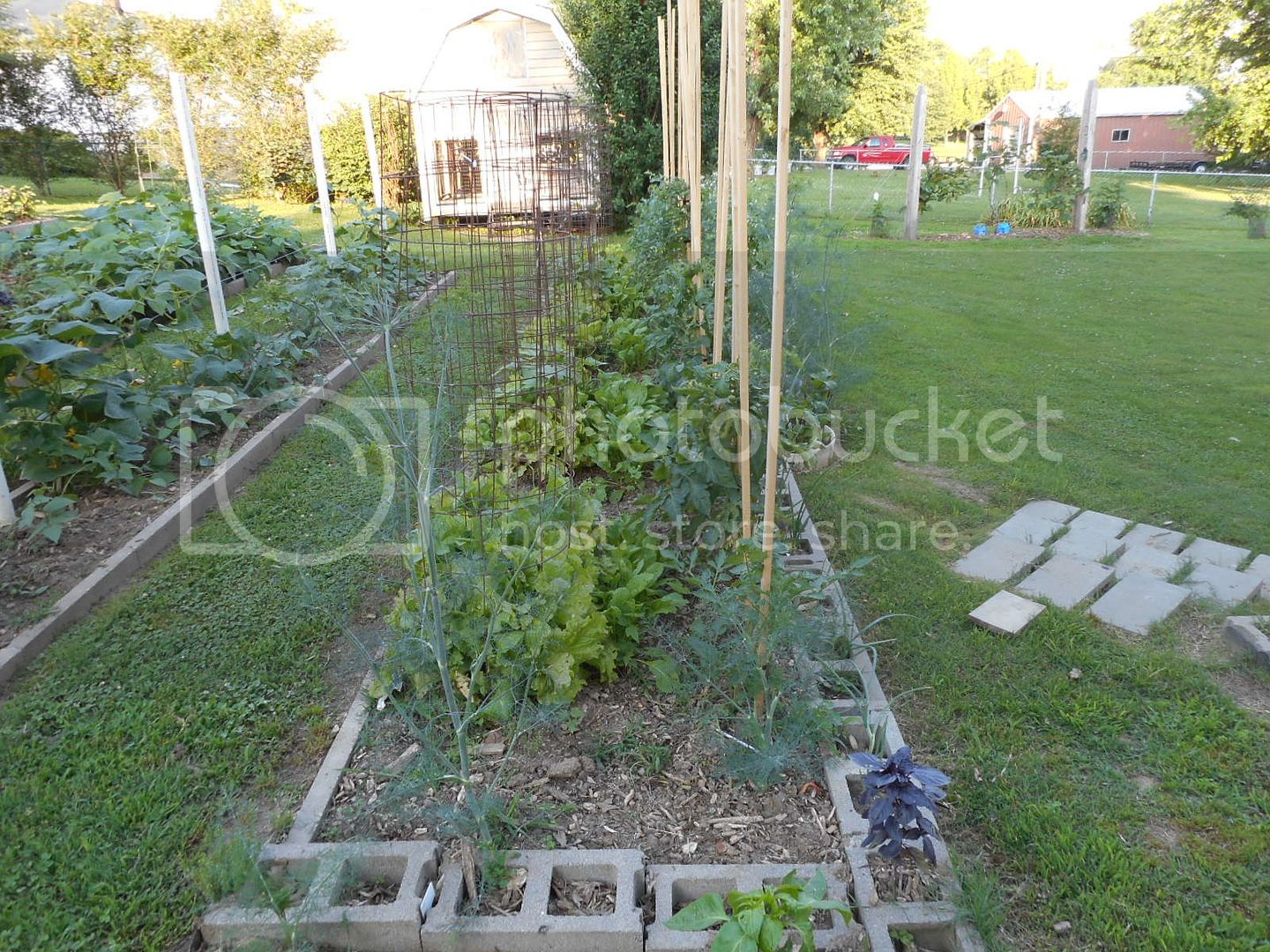 The 2015 Garden - Page 2 008_2