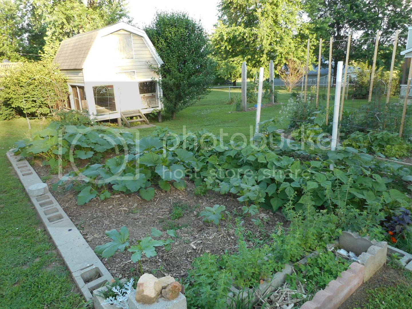 The 2015 Garden - Page 2 010_2