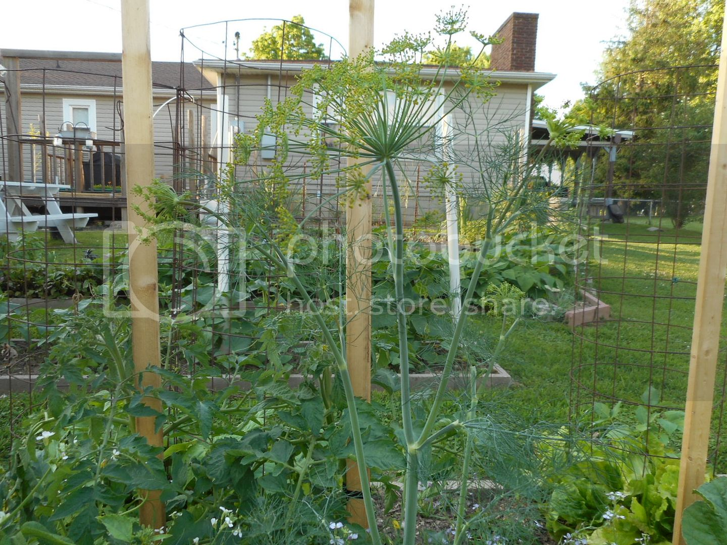 The 2015 Garden - Page 2 015_1