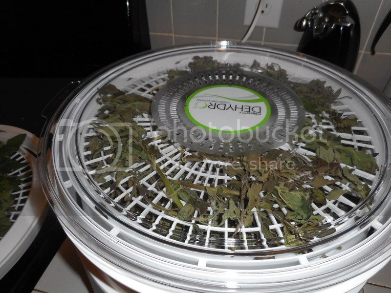 Learning to Dry With New Dehydrator 003