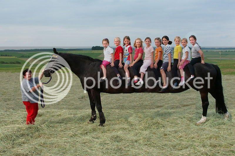 Vos photos amusantes (suite1) - Page 2 Horse_limousine