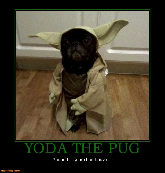 Yoda Olive Head with Hong Kong COO#3 Yoda-the-pug-pug-yoda-pooped-in-shoes-demotivational-posters-1330334973