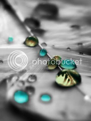 Kapljice vode - Page 4 Turquoiseandbrowndewdrops
