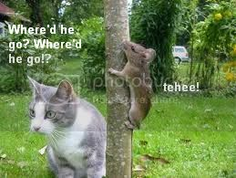 Funny Animals Pictures, Images and Photos