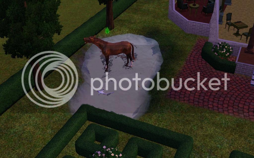 Horse walks on water photo Horsewalksonwater.jpg