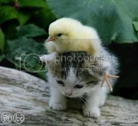 Mochuelooooo Too-cute-bird-and-cat