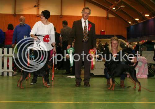 Norsk Dobermann Klubs romjulsutstilling 30.12.2011 077