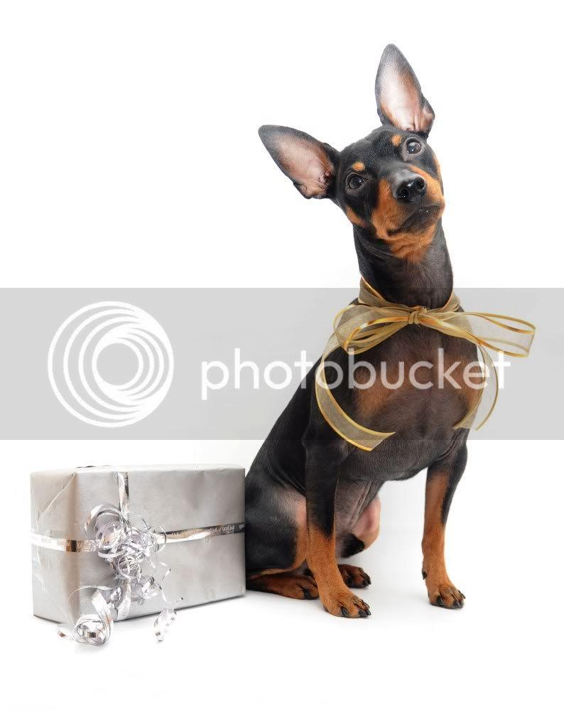Juleannonser 2011 - Hundesport og Pinscherposten 095
