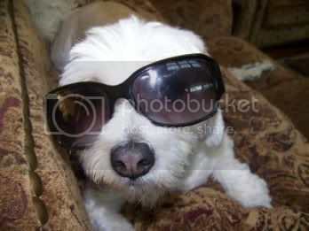 Your Other Pets Glasses_1