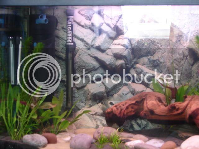 My new 35G planted tank - In progress - Update 11/06 DSC00691