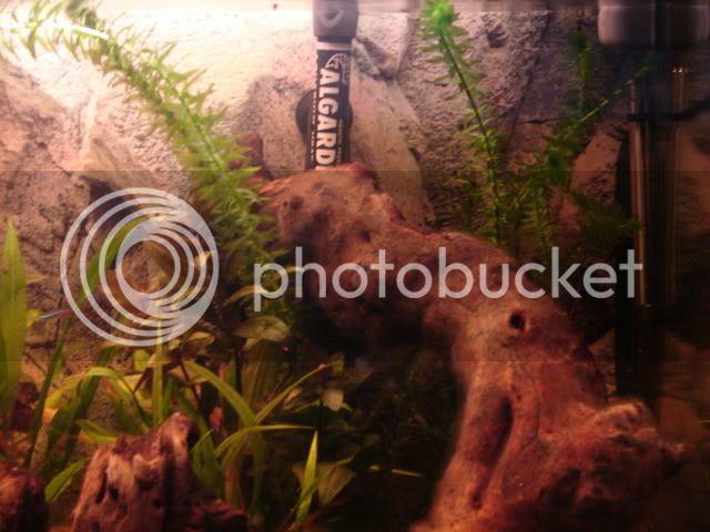 My new 35G planted tank - In progress - Update 11/06 DSC00830