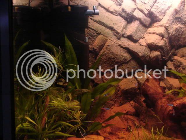 My new 35G planted tank - In progress - Update 11/06 DSC00831