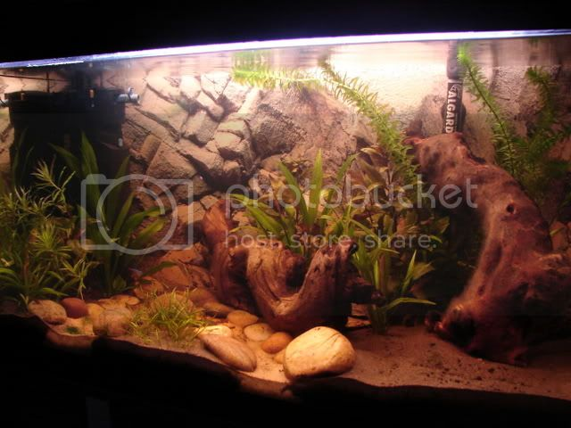 My new 35G planted tank - In progress - Update 11/06 DSC00834