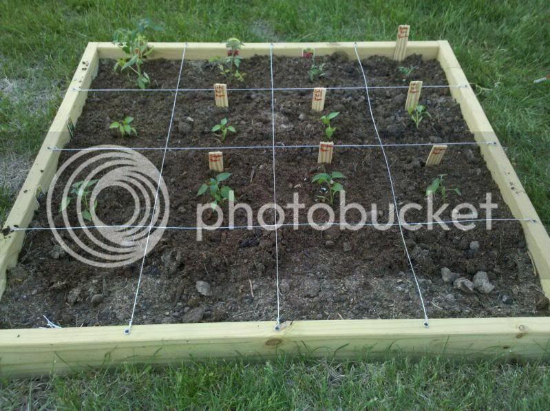 My garden layout Garden2011layout