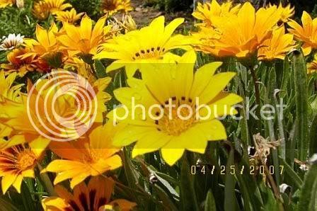 சேனையை அலங்கரிக்கும் பூக்கள் 02 - Page 19 Flowers