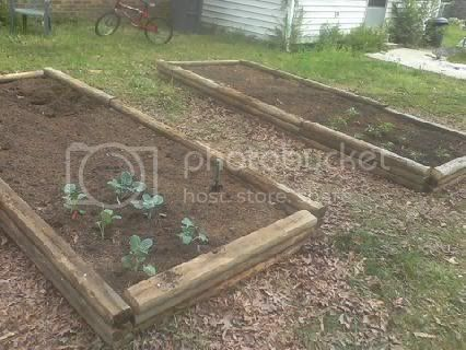 pics of my raised beds Startorraisedbeds4-5-11