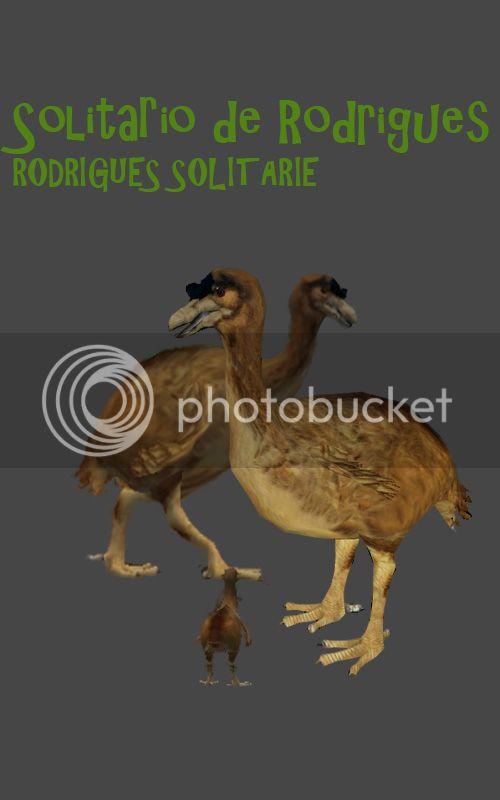 Solitario de la isla Rodrigues / Rodrigues Solitaire Solitarioderodriguescorrect_zps43d6a62d