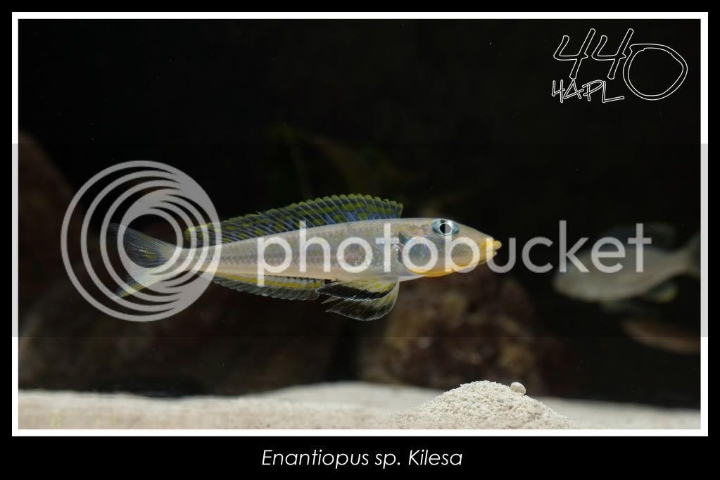 720l Eco Tanganika - Página 2 Kilesa10