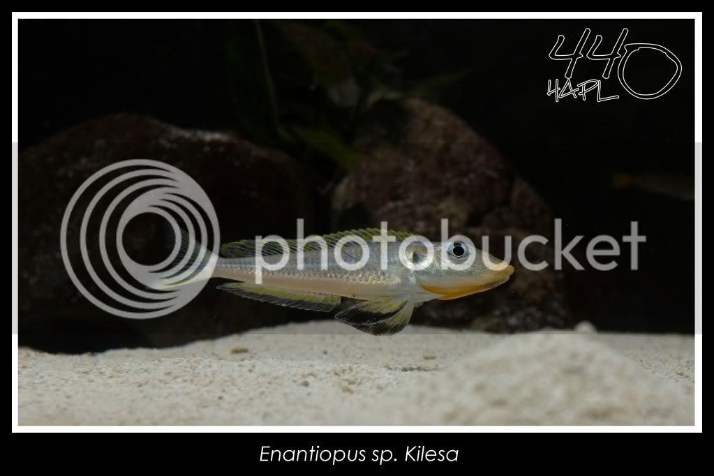 720l Eco Tanganika - Página 2 Kilesa12