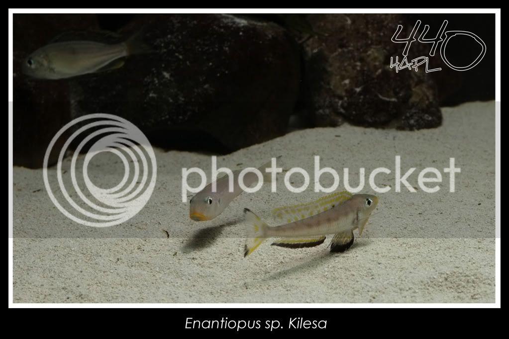 720l Eco Tanganika - Página 2 Kilesa21