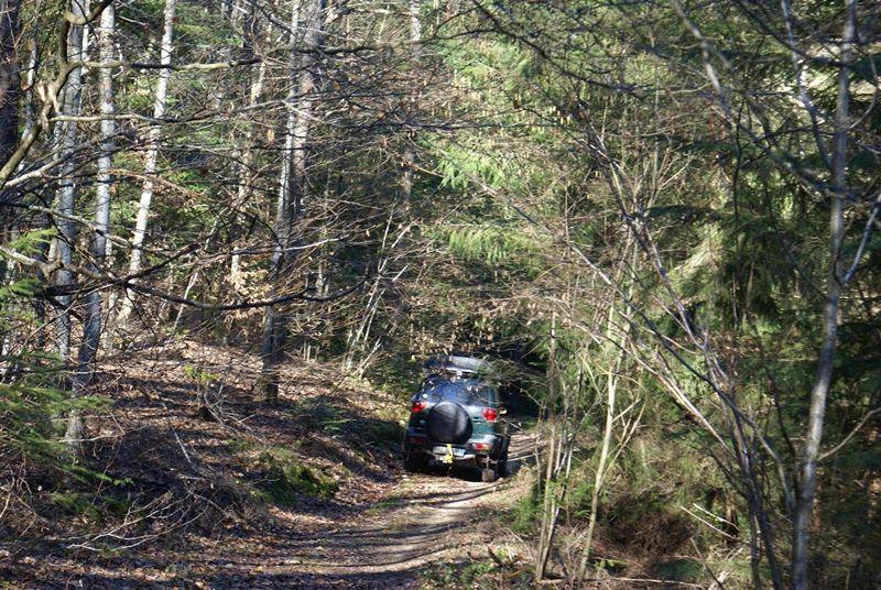 petite journée super sympa avec Max83 Forest_zps0eecf867