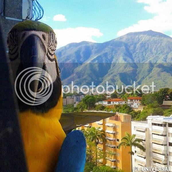 Algo de mi Caracas bella. Guaca%20con%20avila_zpsvzjxidcl
