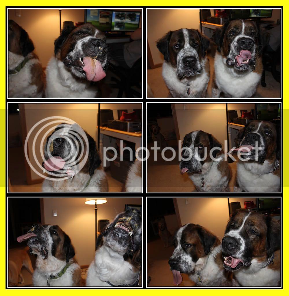 Dogs + Peanutbutter = hilarious Butter2a