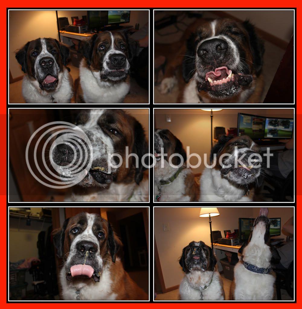 Dogs + Peanutbutter = hilarious Butter3a